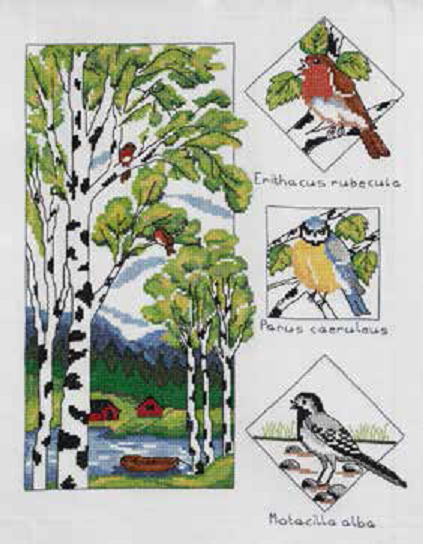 Birch And Birds